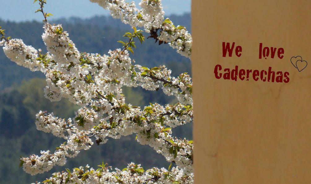 Floración en Valle de Caderechas