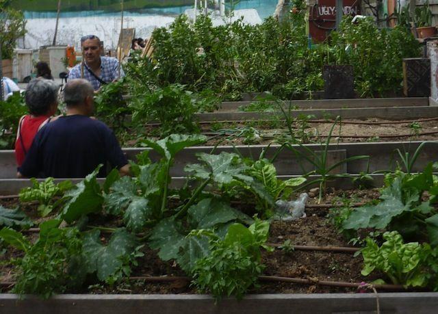 Bancos de hortalizas en el Campo de la Cebada