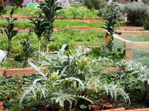 Verduras y hortalizas en macetas
