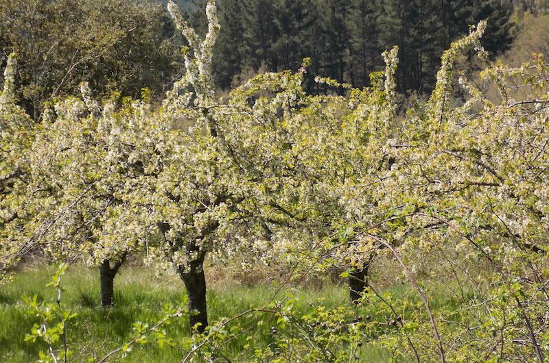 Primavera en Caderechas