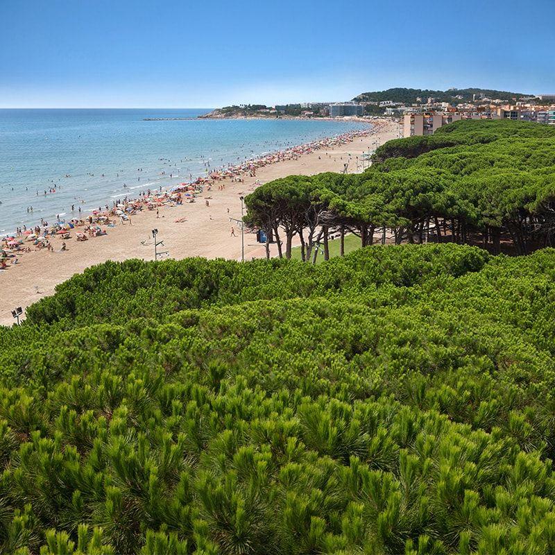 Vegetación y playa en Costad Dorada