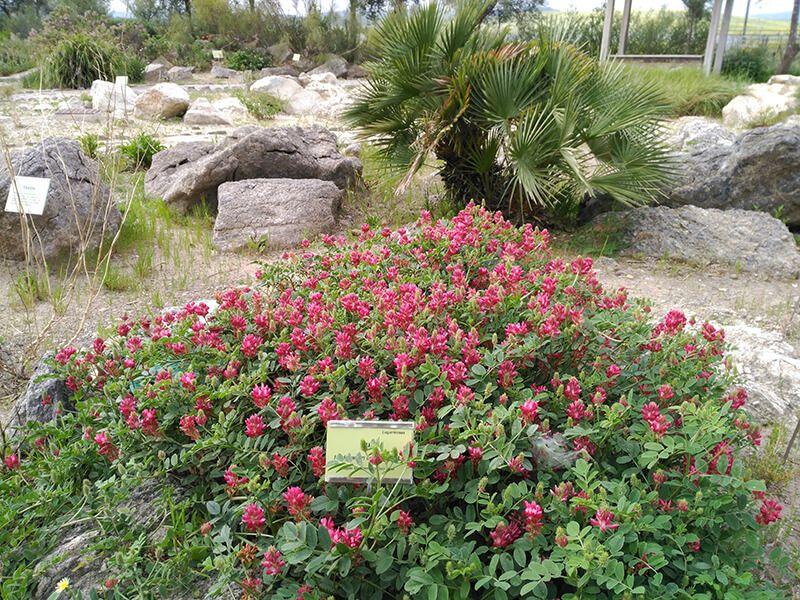 plantas El Aljibe