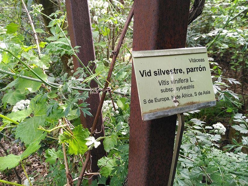 jardín botánico especies