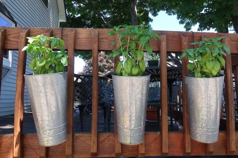 Un GuestToGuest en Concord con planta aromáticas
