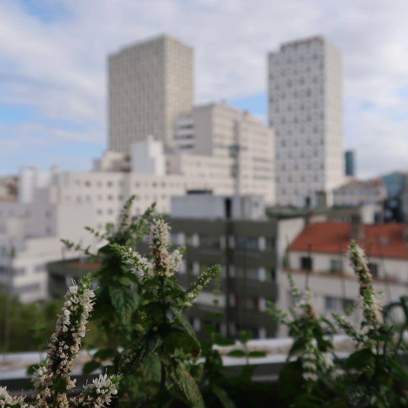 Vistas desde la terraza de mi GuestToGuest en París