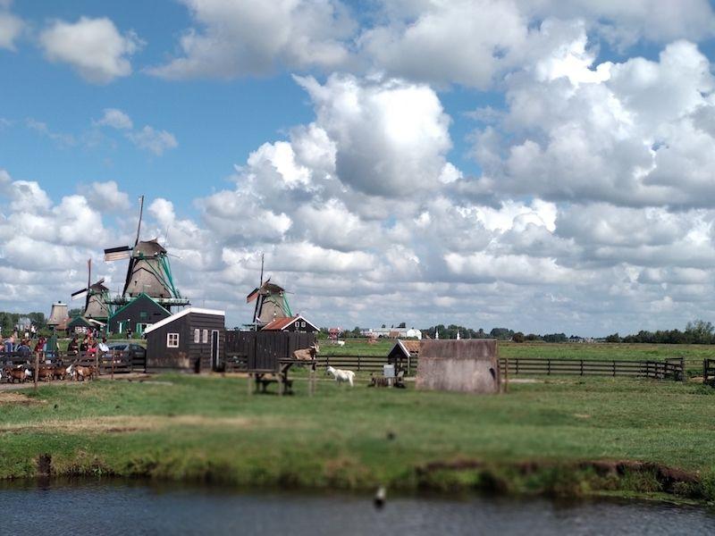 Excursiones cerca de Amsterdam para ver molinos