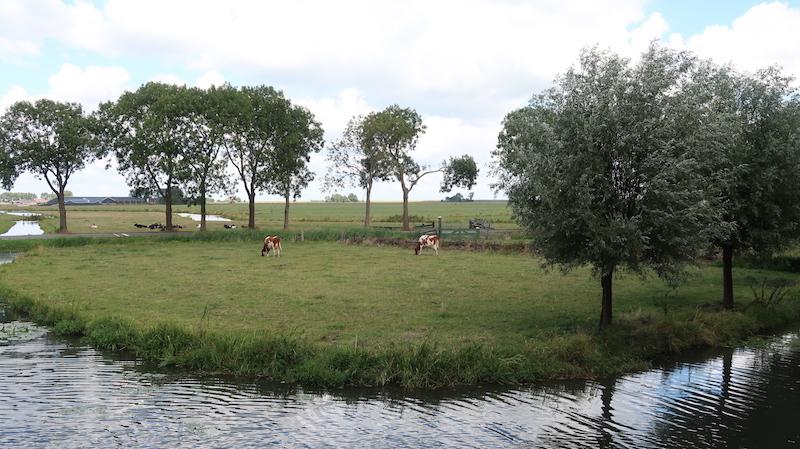 Visitar molinos en Holanda en el campo